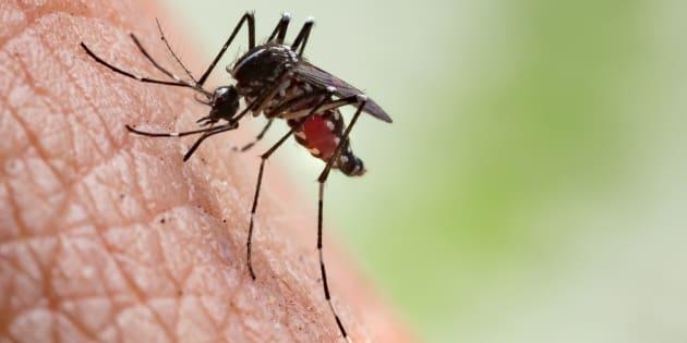 A Roma e nel Lazio 13 casi accertati di Chikungunya |  scontro Regione-Campidoglio