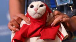 Coupe du monde: Achille le chat prévoit une victoire de la Russie en match