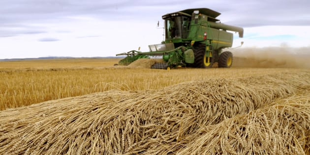 Tara Giles operates a combine as she harvests wheat on a 160-acre field located south of High River, Alta., in 2013.