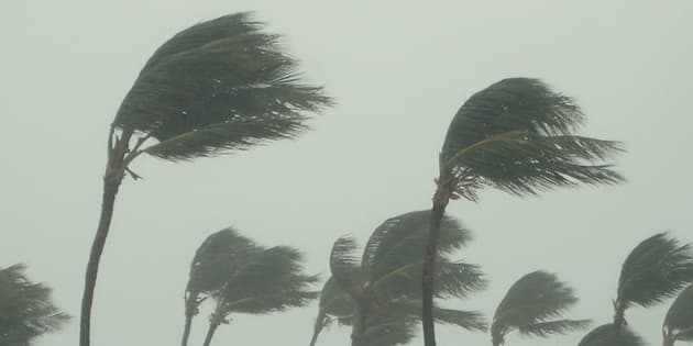 Tropical storm stock photo.
