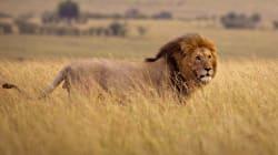 L'extinction de masse des animaux