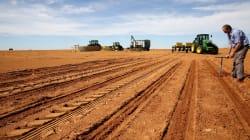 Why Farming Will Make A Big Comeback In