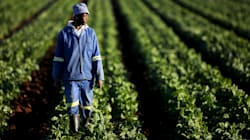 Land Reform Clarity Will Help Advance The Agriculture