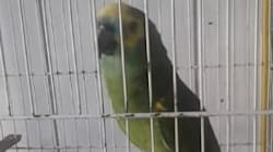 This Parrot Sings Like Rihanna, And We're