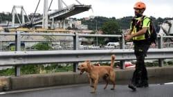 DAL SISMA AL PONTE - I cani-eroi del terremoto tra le macerie di
