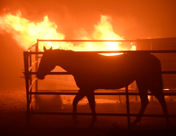 Famous jockey rescues horses during California fire