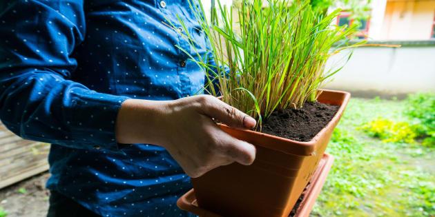 Plantas medicinais para ter em casa.