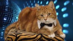 Ce chat star de l'Internet est