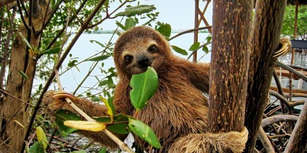 La paresse pourrait être un avantage biologique pour la survie sur Terre.