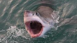 Un homme de 26 ans tué par un requin à Cape