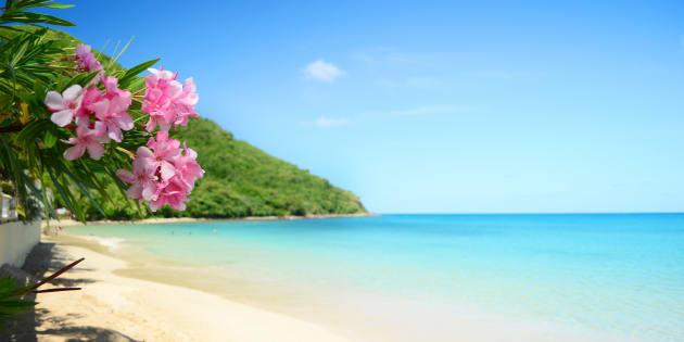 Stipendio da 110 mila euro, vacanze alle Barbados, cene stellate: questo annuncio di lavoro da tata è il più ambito del mondo