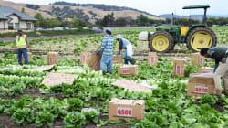 BLOGUE Salubrité alimentaire: sommes-nous au pied du