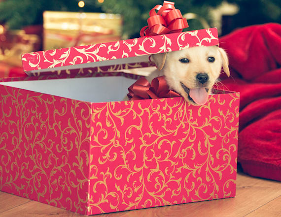 Think twice about gifting a pet for the holidays