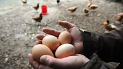 Les œufs bio, bonne conscience et grosse marge? La question qui fâche du HuffPost à cet entrepreneur