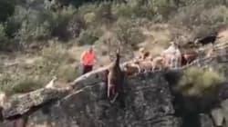 Cette vidéo de chasse où de nombreux chiens meurent fait scandale en