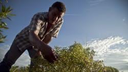 Fertilizantes baratos: otra promesa presidencial
