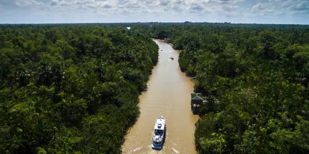 Dos 850 milhões de hectares do país, 550 milhões ainda estão sob a forma de vegetação nativa.