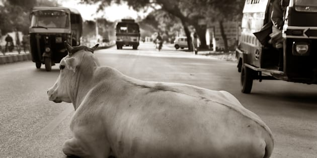 A cow relaxing on a busy city street in central India.