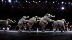 El circo Ringling Bros. se va para