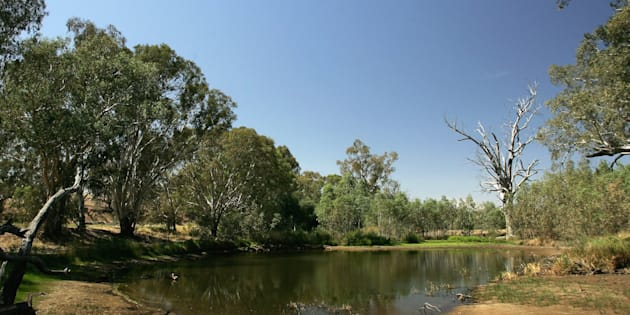 The Darling River in a typically low season. Every drop is like gold.
