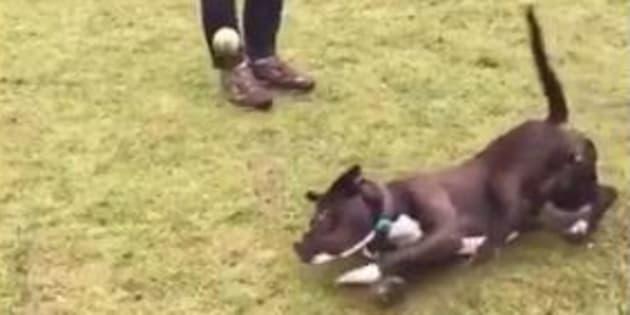 """La preuve est faite que son chien est vraiment """"nul"""""""