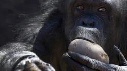 Le zoo de Rome a trouvé une solution originale pour réchauffer les