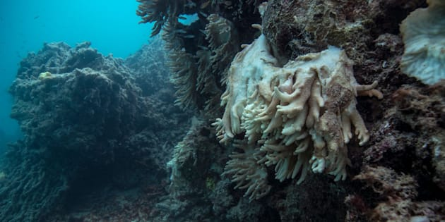 Soft coral decomposing and falling off the reef, captured by the XL Catlin Seaview Survey at Lizard Island on the Great Barrier Reef in May 2016.