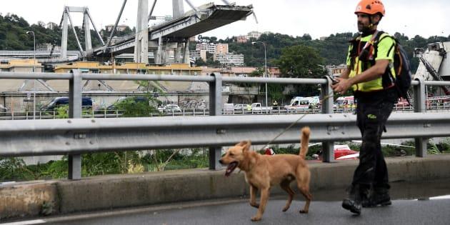 Tra i soccorritori di Genova anche i cani-eroi del terremoto