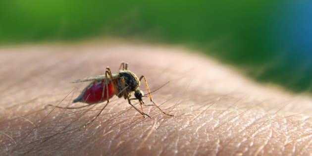 Fda approva il Krintafel, il nuovo farmaco contro la forma recidivante della malaria