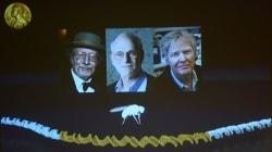 Tres investigadores del reloj biológico ganan el Nobel de Medicina