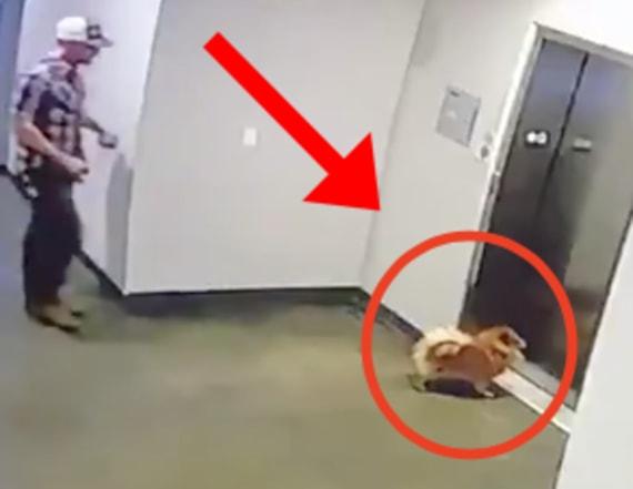 Video shows bystander save dog from elevator