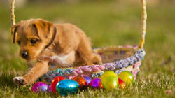 Australia's Largest Easter Egg Hunt FOR DOGS Is