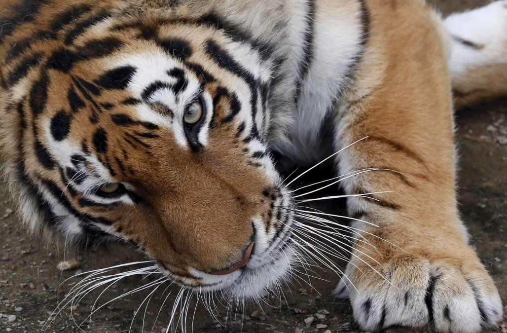 Tiger Self Storage 8940 Alder Ave Sacramento Ca 95828