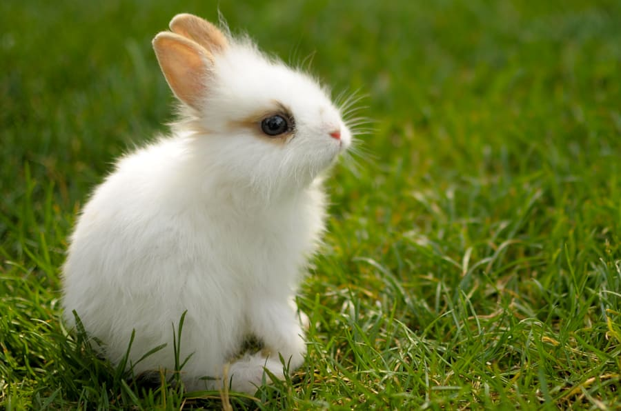 A very young white bunny in the green grass