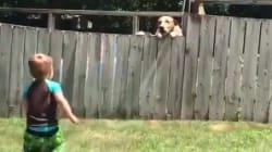 Internet fond devant la complicité entre ce chien et ce