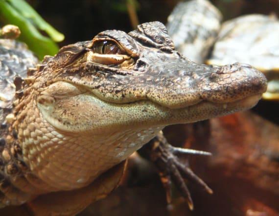 Cops: Flushing drugs down could create 'meth-gators'