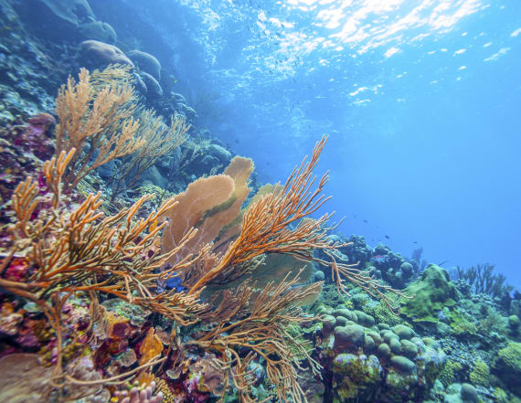 Scientists: Coral reefs could be wiped out by 2100