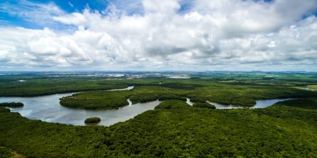 Quatre millions d'hectares d'Amazonie sont menacés