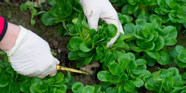 Les pesticides au métam-sodium vont être définitivement interdits en France