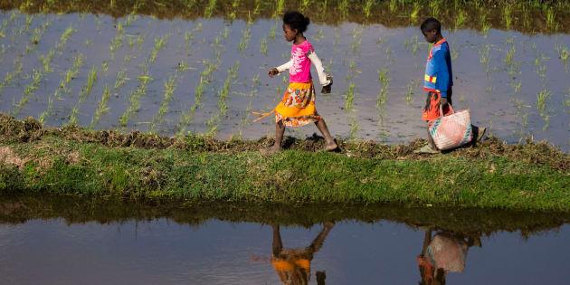 ANTANANARIVO, MADAGASCAR - SEPTEMBER 2 :  Kids work at a paddy field in Antananarivo, Madagascar on September 2, 2017. (Photo by Ahmet zgi/Anadolu Agency/Getty Images)