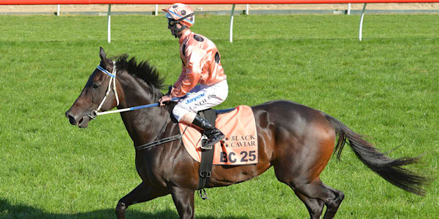 Black Caviar retired in 2013, just before her eighth birthday.