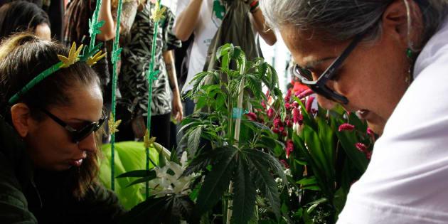 Marcha da maconha em São Paulo pede liberação do consumo da droga.
