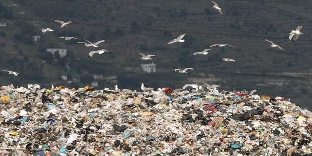 Gabbiani in volo sulla discarica di rifiuti ad Acerra, Napli, 4 giugno 2007. In Campania anche gli animali devono fare i conti con l'emergenza rifiuti. ANSA / CIRO FUSCO
