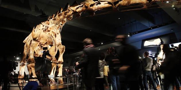 Le plus grand dinosaure a maintenant un nom