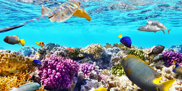 Vista submarina con corales y animales marinos.