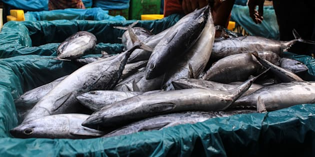Various types of fish seen display in the traditional markets of Lhokseumawe City, Indonesia.