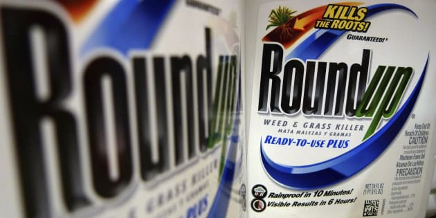 Le «Roundup» de Monsanto, un herbicide à base de glyphosate.