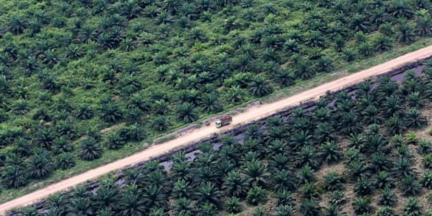 An aerial view of an oil palm plantation in Musi Banyuasin Regency, South Sumatra, Indonesia/via REUTERS
