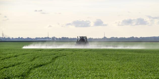 Les substituts du glyphosate sont-ils moins dangereux?