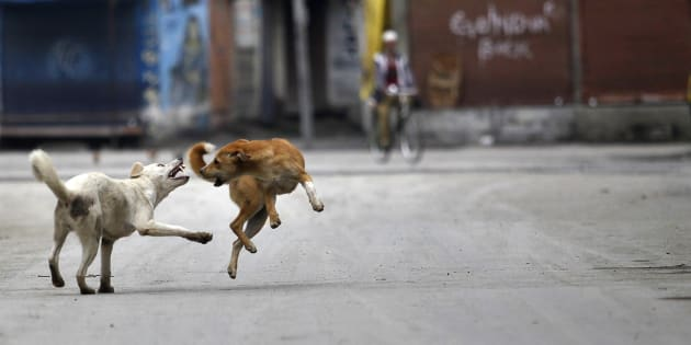 Show Compassion, But Don't Let Stray Dogs Become Menace To Society, Says SC